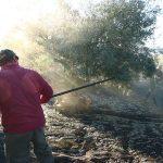 Comienza la campaña del aceite virgen extra AOVE 2020 en España