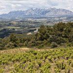 Los mejores vinos veganos by Zoltan Nagy